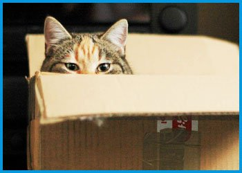 moving tips for pet owners
