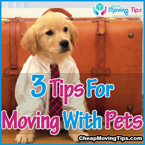 tips for moving pets